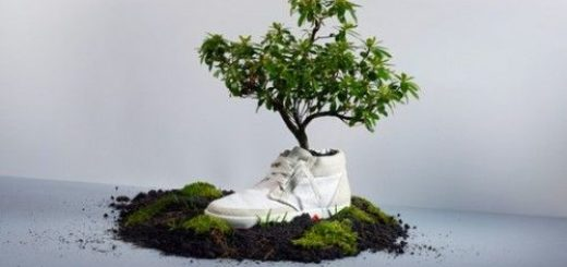 shoes-planter