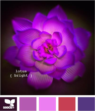 LotusBright515