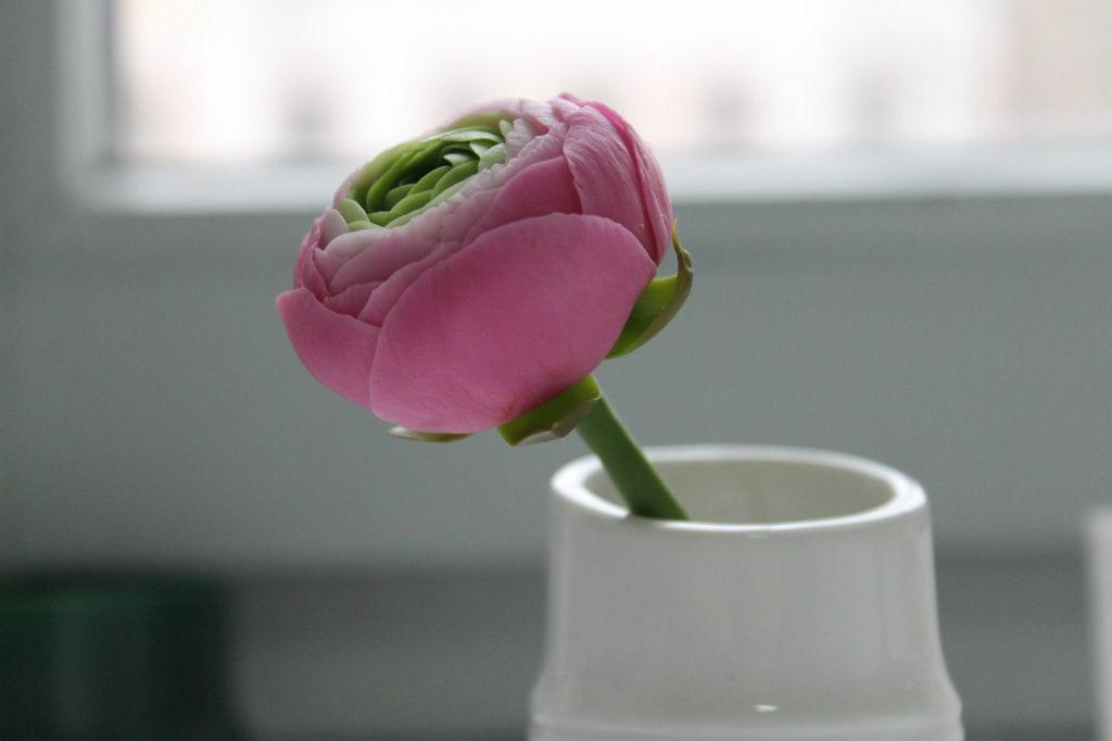 Цветы из полимерной глины картинки 2