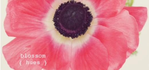 BlossomHues600