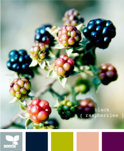 BlackRaspberries615