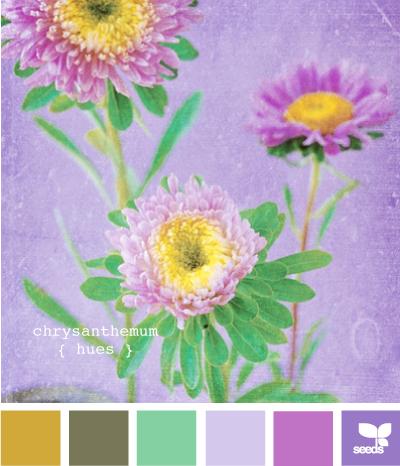 ChrysanthemumHues610