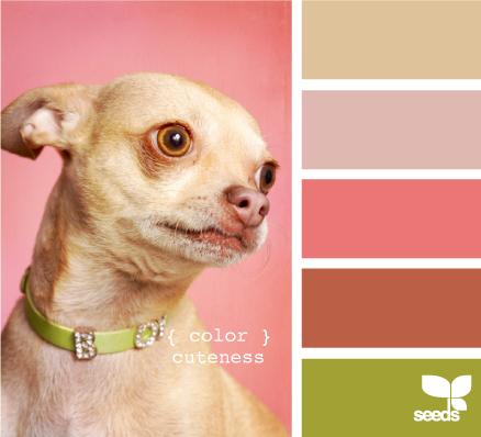 ColorCuteness605