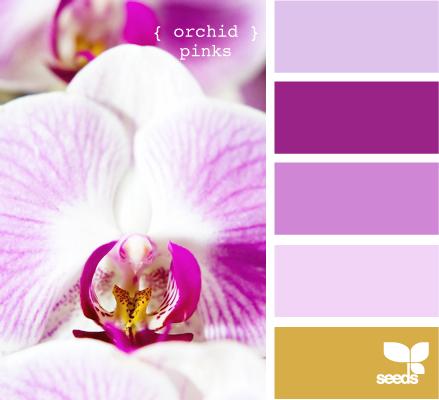 OrchidPinks605