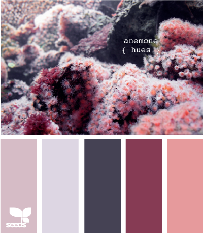 AnemoneHues615