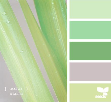 ColorStems605