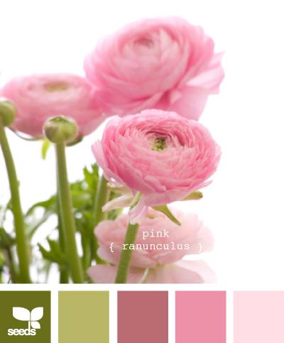 PinkRanunculus605