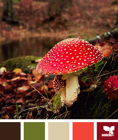 MushroomedAutumn