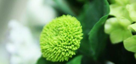 хризантема из полимерной глины УРОК