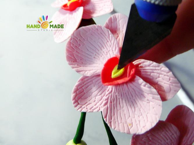 obruch-orhidey14