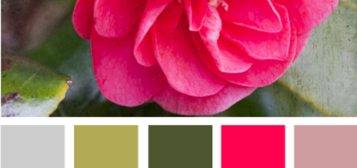 BloomingColor615