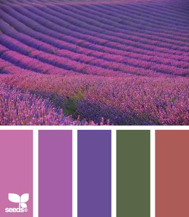 LavenderFields