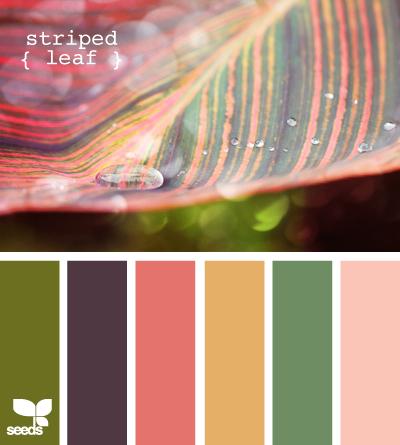 StripedLeaf620
