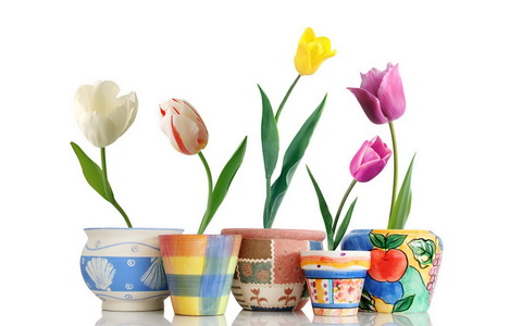Beautiful-Tulip-Flowers-Pictures-And-Wallpapers36_новый размер