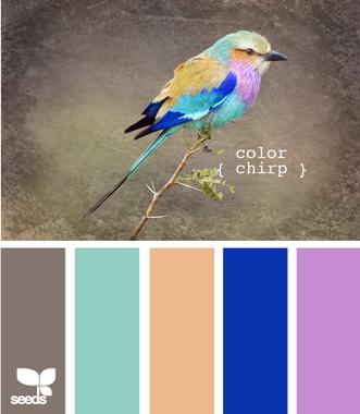 ColorChirp625_новый размер