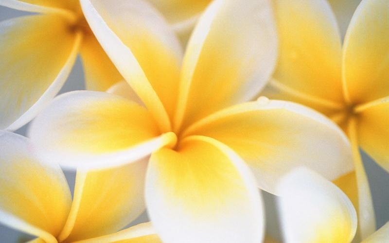 Yellow Flower_новый размер