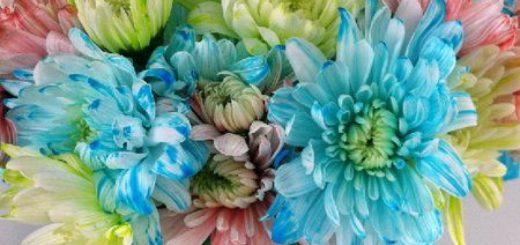 d002-dyeing-flowers-dream-a-little-bigger