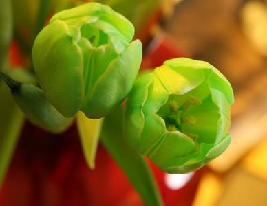 green_tulips_by_mykey100-d2ytdvj_новый размер
