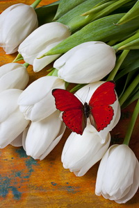 red-butterfly-on-white-tulips-garry-gay_новый размер