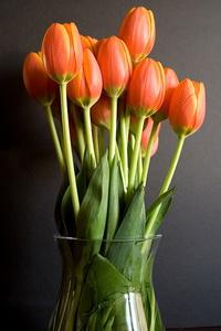 tulips-10321_новый размер