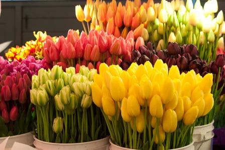 tulips_новый размер