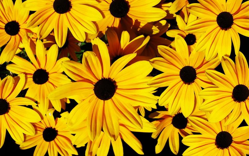 yellow_flowers_background_19_новый размер