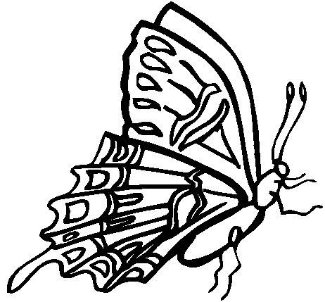butterfly_profile