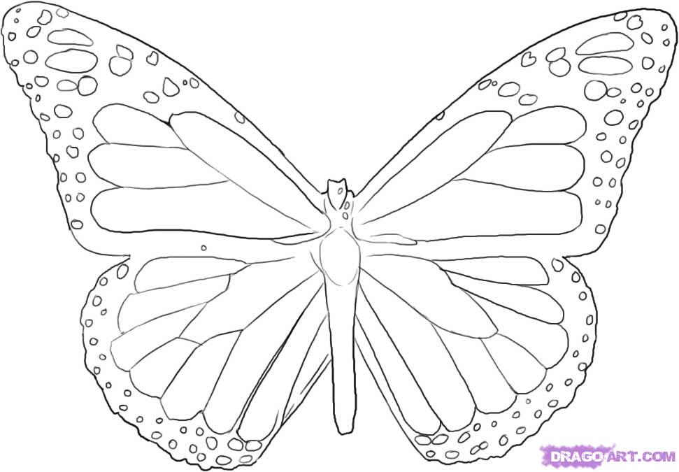 how-to-draw-a-monarch-butterfly-step-4