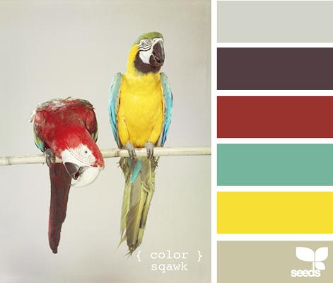 ColorSquawk605