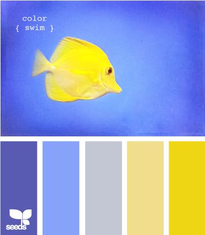 ColorSwim610