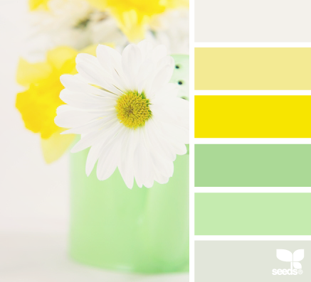 DaisyBrights