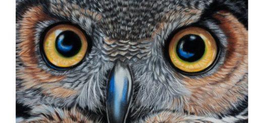 Рисуем сову пастелью_by_sarahharas